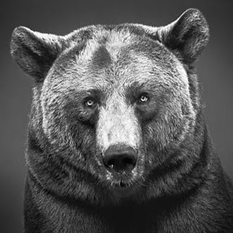 FRENCHGRIZZLY
