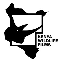 Kenya Wildlife Films (kenya-wildlife-films)
