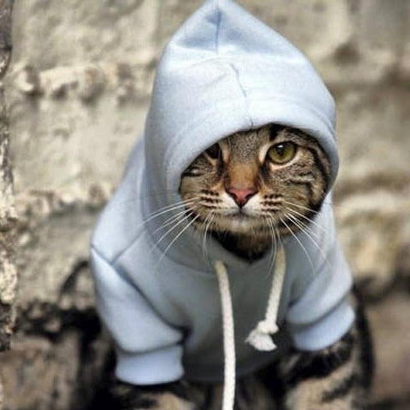 Смешная картинка кота перепутали с капюшоном была часто в вк, картинки фото