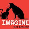Imagine Pet Rescue —