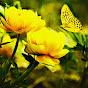 Yellowrose49