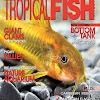 TropicalFishHobbyist