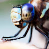 Dragonfly Photographic Arts