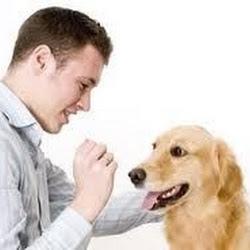 PuppyTrainingDog