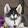 watchdog 36
