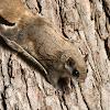 FlyingSquirrelAOK