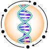BioCyc and Pathway Tools