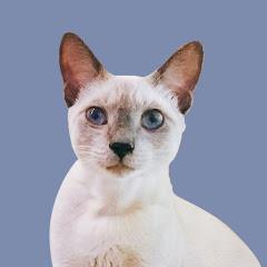 貓的執事CatButler