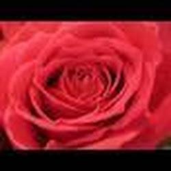 RoseHip94