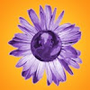 purplearth cozmik imagez