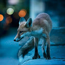 FoxInTheTwilight