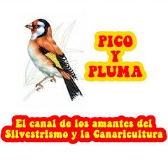 PICO Y PLUMA