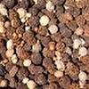 SeedsandSuch