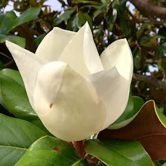 Idalina Gomes