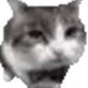 Cat Pusic