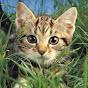 Как нарисовать: Звезду - Кот и Кит