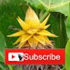 Ciekawe Rosliny-Video Blog