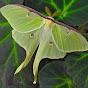 insectsafari