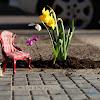 Pothole Gardener