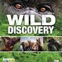 Wild Discovery TV