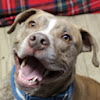 Adopt-A-Dog Shelter