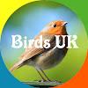 Simbird - Birds and Wildlife UK