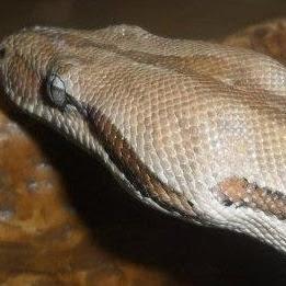 SnakeCentral69