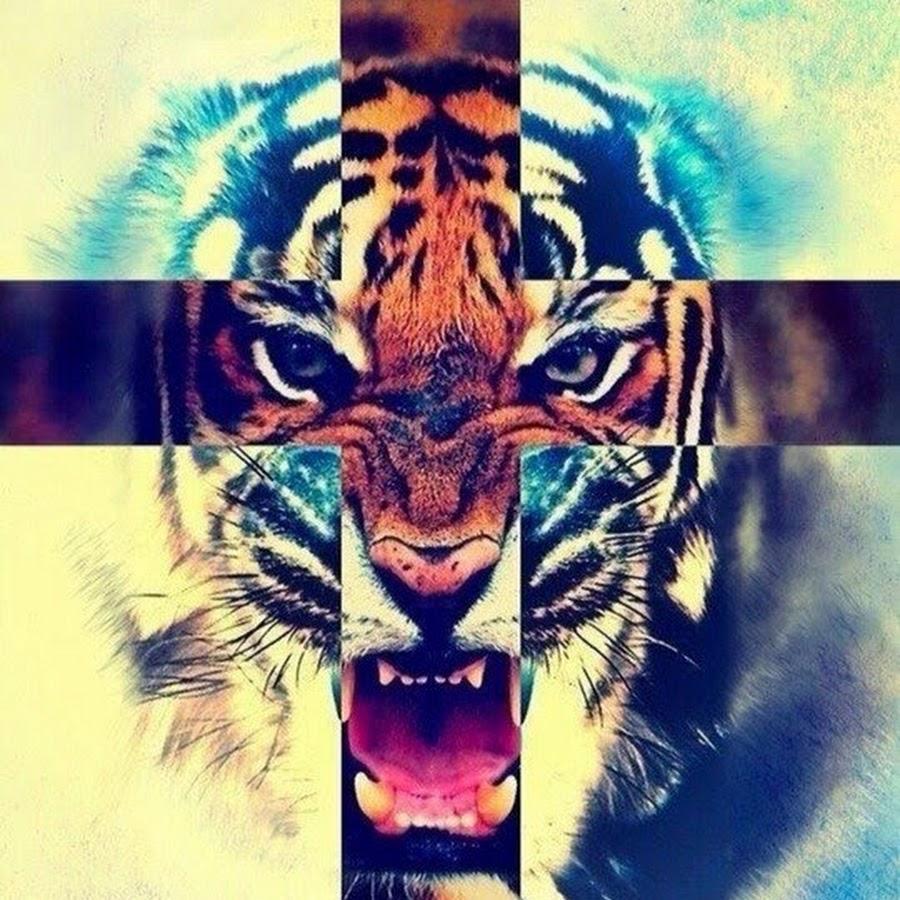 тигры фото на айфон 5 #11