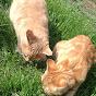 Simba and Kiara The Cats
