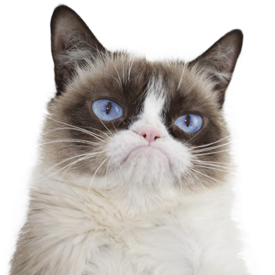Real Grumpy Cat - YouTube