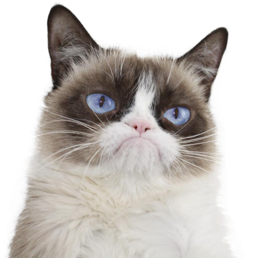 Grumpy Cat Youtube Channel