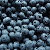 BlueBerryInABox
