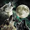 super wolfpack