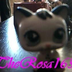 TheRosa165