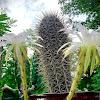 Cactus Zach