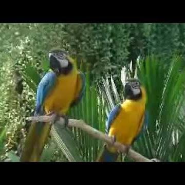 gottaluvbirds
