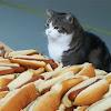 Hat Dag Cat