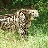 CatzTours Safaris
