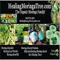 HealingMoringaTree