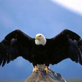 Aguila Eterna