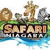 SafariNiagara