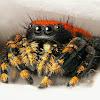 SpiderKing511