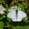 butterfliesonfilm