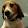Zeke Beagle