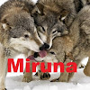 MirunaLoba