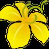 royalflora