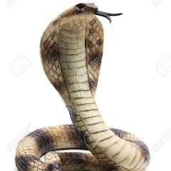 Snake Channel