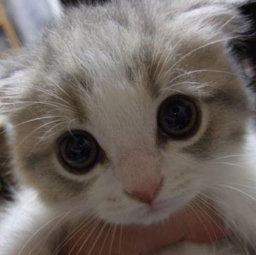 Mew Miau