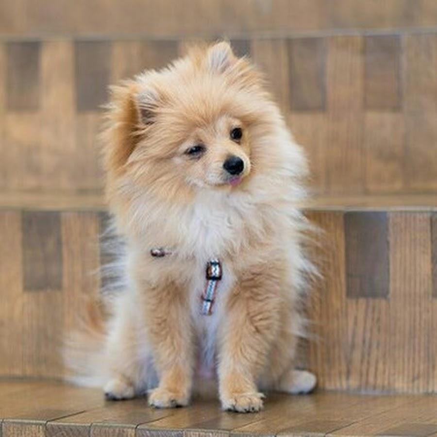 Logan S Dog