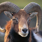 The Society Of The RAM (S.O.T.E.R.)